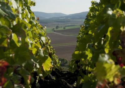 la_vigne-3