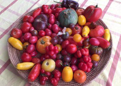 tomates_sept2017