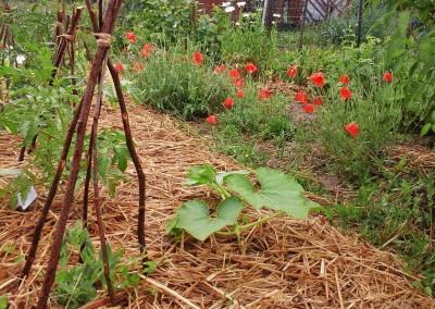 Jardin-potager permaculturel