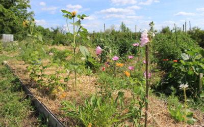 Revue POUR – n°230/2016 – Une expérience agriculturelle en vallée de l'Ouche