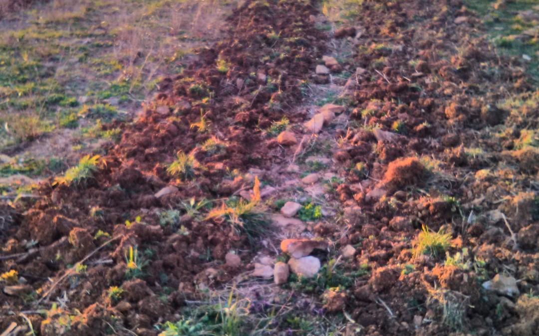 Semis de printemps, plantes bio-indicatrices et observations de sortie d'hiver! Jeudi 31 mars à 9h