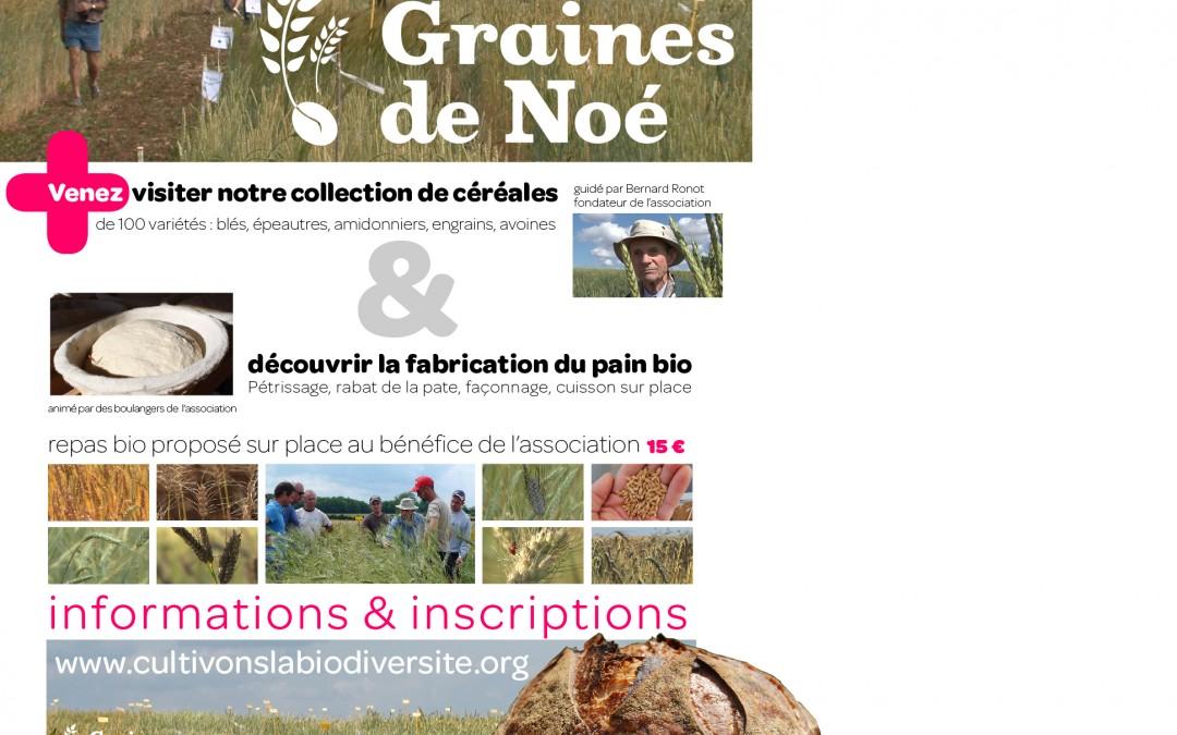 Portes ouvertes Graines de Noé : Semences libres à Fromenteau – 26 juin 2016