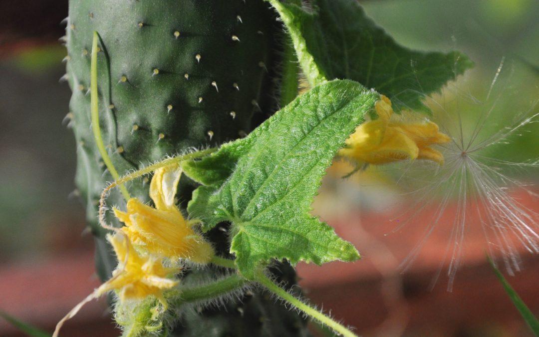 Formation production de semences et semis