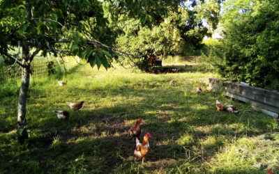 GFA Champs Libres – Portrait de fermes #2 : Élevage de poules pondeuses bio