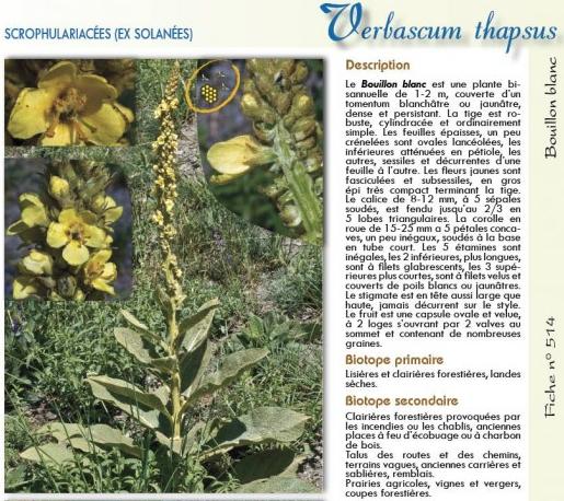 Journée identification des plantes bio-indicatrices en champs et potager / Dimanche 12 mai