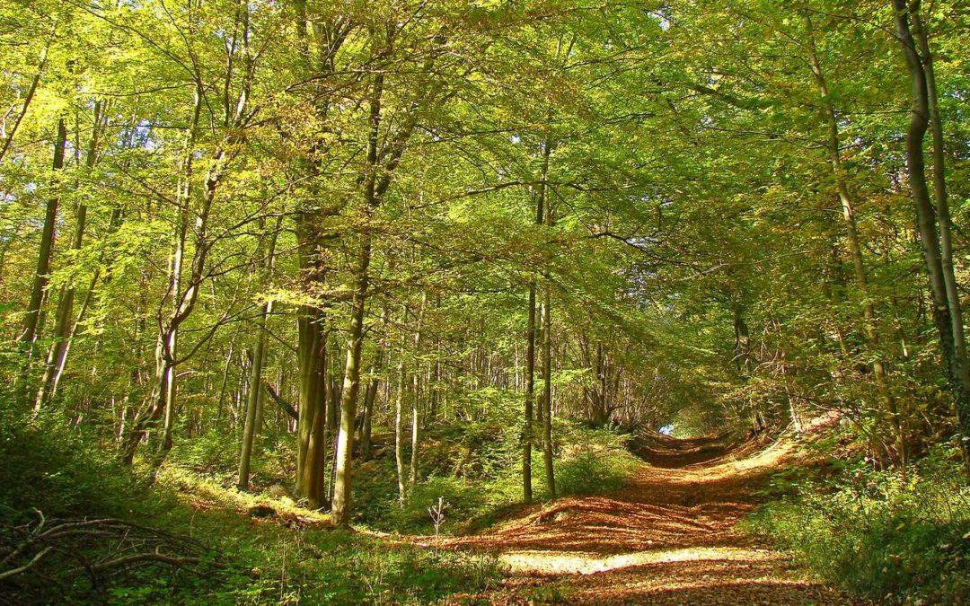 [Atout Bout d'Champ #2] Pour des alternatives forestières / Raphaël Darley / Samedi 24 aout 2019 (10h30)
