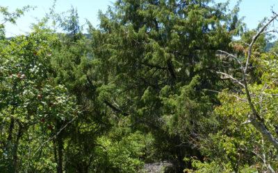 Retour sur la sortie-conférence autour de la thématique du jardin-forêt